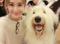 王梦实韩国首尔行,上演真实版美女与狗狗
